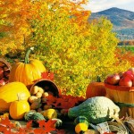 Why Fall Fruits & Veggies are So Dang Good For You