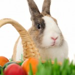 Eco Easter Baskets Tips and Tricks