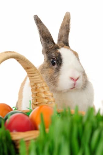 Tips on how to make eco-friendly-easter-baskets