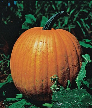 organic heirloom pumpkin giveaway!