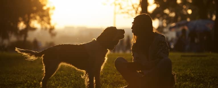 How pets benefit your health and happiness