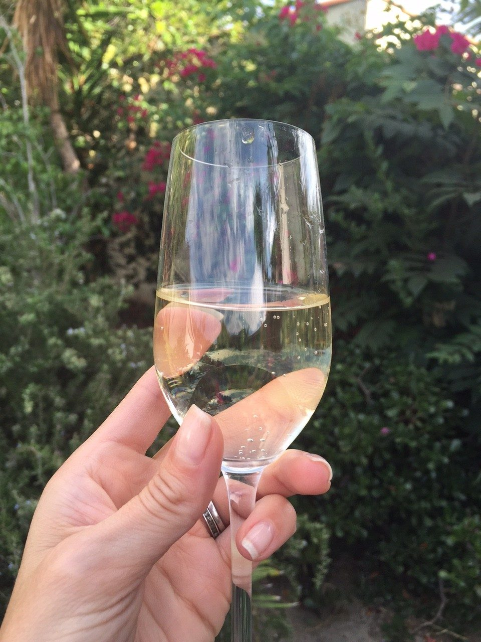 glass of barefoot wines refresher