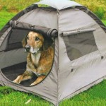 Top Tips for Keeping Your Dog Healthy and Happy on Long Hikes and Camping Trips