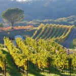 Napa Valley: The Dream Destination for Wine Lovers