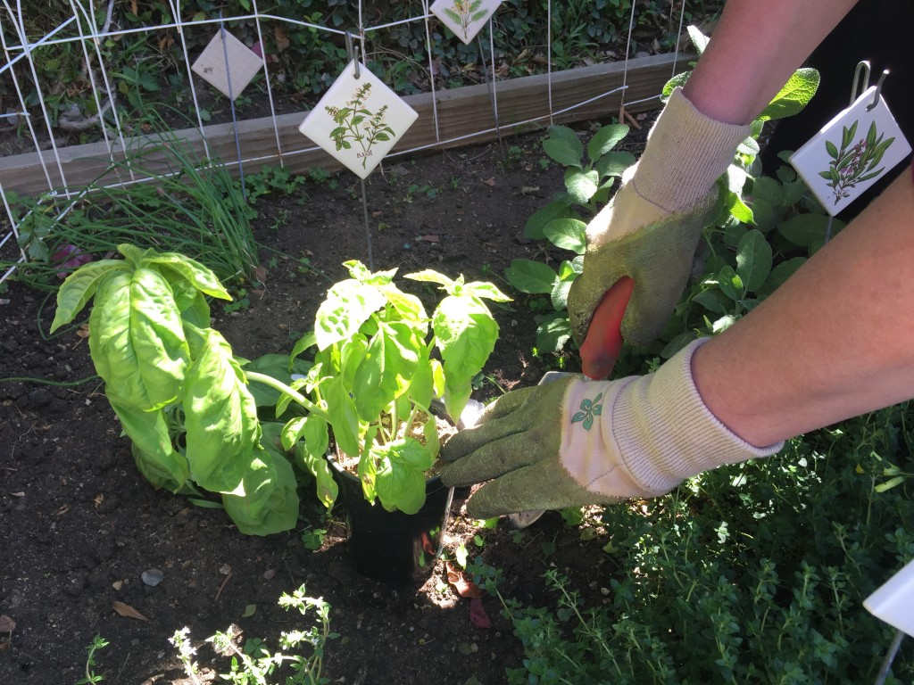 How Green Is Your Garden? - The Healthy Voyager