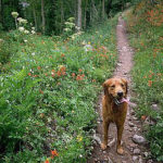 Safety Tips to Utilize While Hiking With Pets