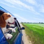 5 Places You and Your Pet Can Travel and Have Fun This Spring