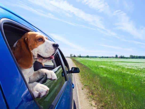 pet travel tips spring