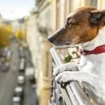5 Common Dog Bad Habits and How to Curb Them