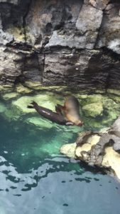 sealions in galapagos