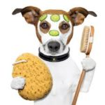 Tips for Maintaining the Health of Your Pet