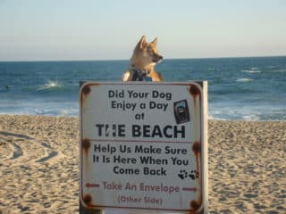 tips for dog at the beach