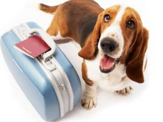 Soft Pet Carriers Facts and Deals