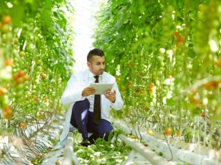 Greener Gardens: When Technology Meets Food Production