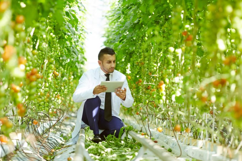 green Food Production