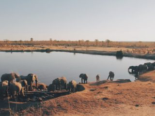 Want To Help Zimbabwe? Go On A Safari
