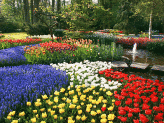 3 Great Travel Destinations in the World for the Best Flowers