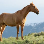 Horse Relocation: How To Smooth The Transition And Create A Stress-Free Experience