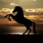 Ten Ways to Keep Your Horse Healthy and Happy