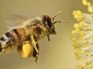How Bee Pollen Enhances Your Health And Promotes Well-Being