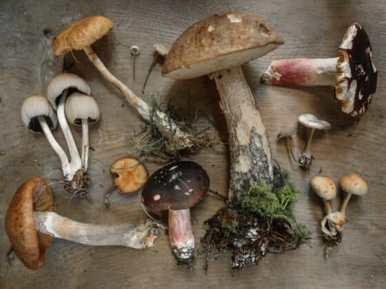 Tips to Growing Your Very Own Gourmet Mushrooms At Home
